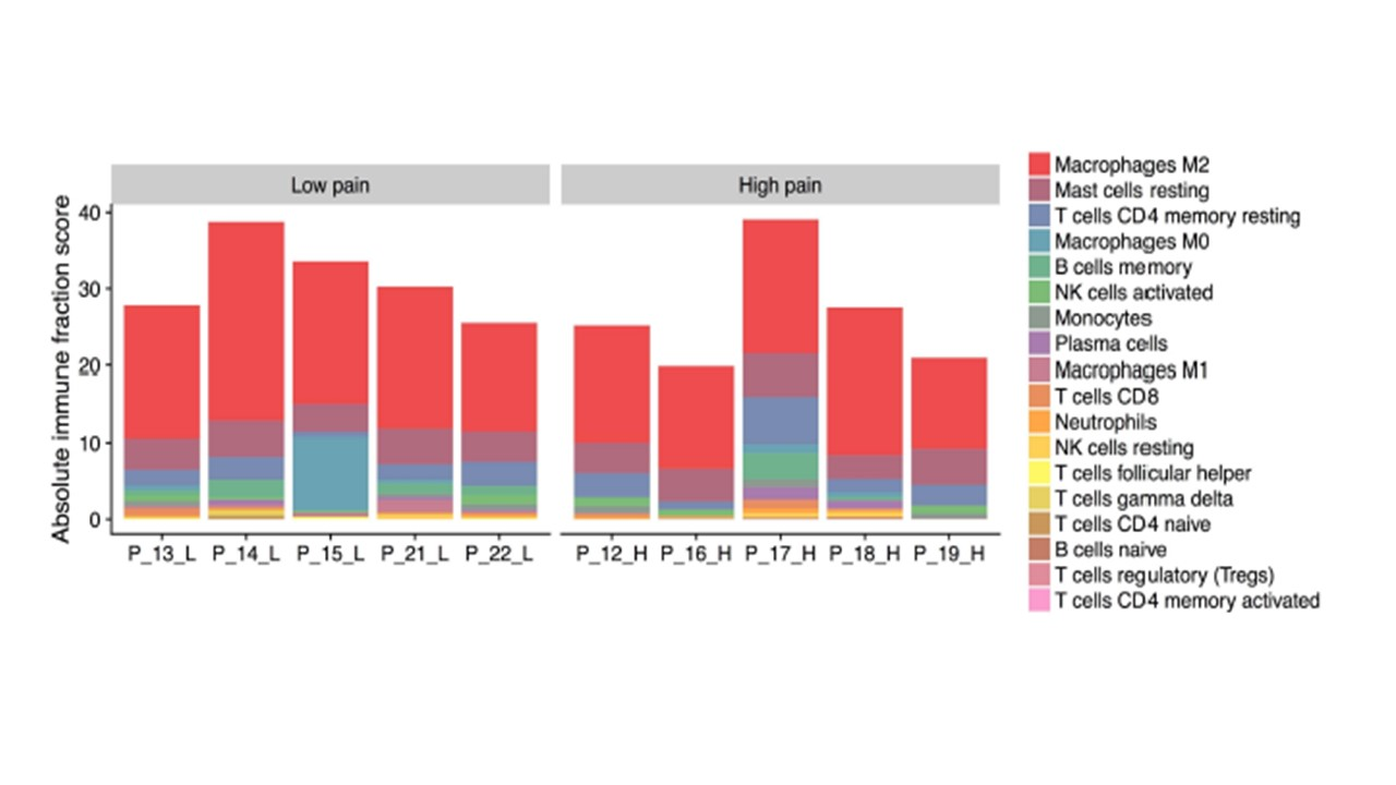 Pain-Associated Transcriptome Changes in Synovium of Knee Osteoarthritis Patients